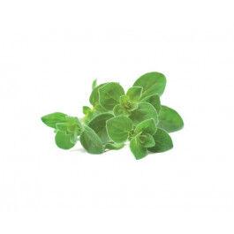 Recharge triple d'Origan pour Smart Garden - Click and Grow
