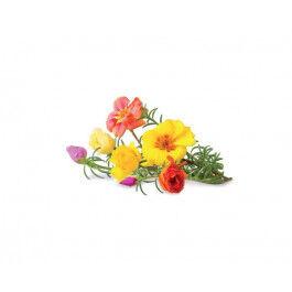 Recharge triple de Roses pour Smart Garden - Click and Grow