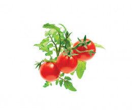 Recharge triple de Mini-Tomates pour jardin d'intérieur Smart Garden 3 - Click and Grow
